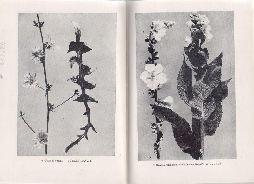F. Krkavec, I. Hájková - Léčivé rostliny Slezska